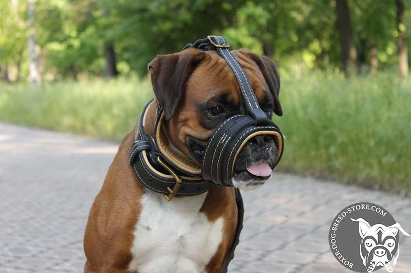 Boxer muzzle with Nappa padding will not rub