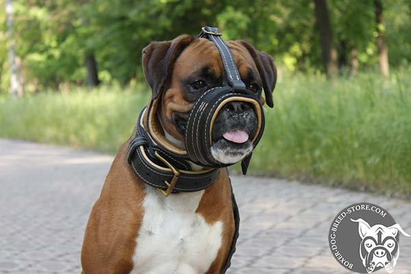 Lightweight leather Boxer muzzle for walking