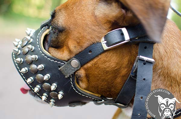 Leather Boxer muzzle with Nappa padding