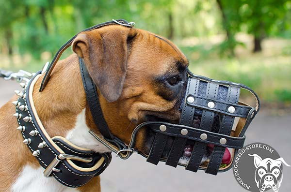 Boxer basket muzzle with good ventilation
