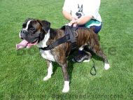 Boxer Dog Harnesses