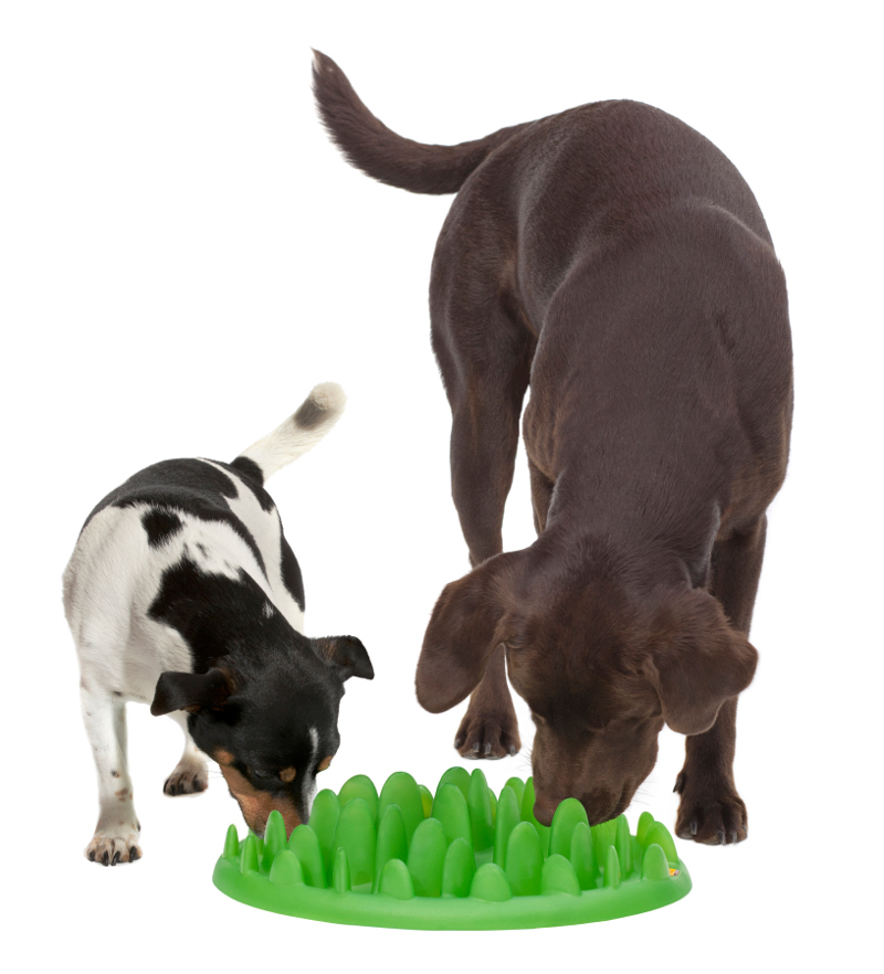 small cats feed interactive feeding pet watering product dog anti bowls fun chocking bowl for bloat slow dogs stop feeder