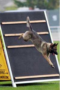 How to training my dog