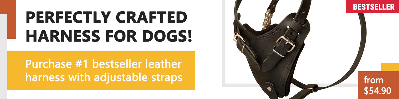 Leather Boxer Harness for Attack Training